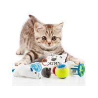 παιχνίδια γάτας