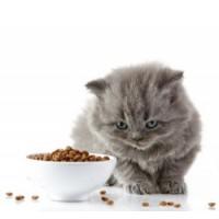 τροφές για γάτα